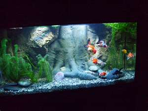 Goldfish Tanks – The Importance of Choosing The Right Tank!