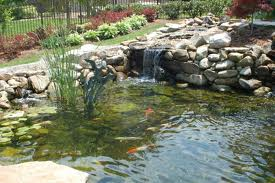 Koi Pond Filtration And Design