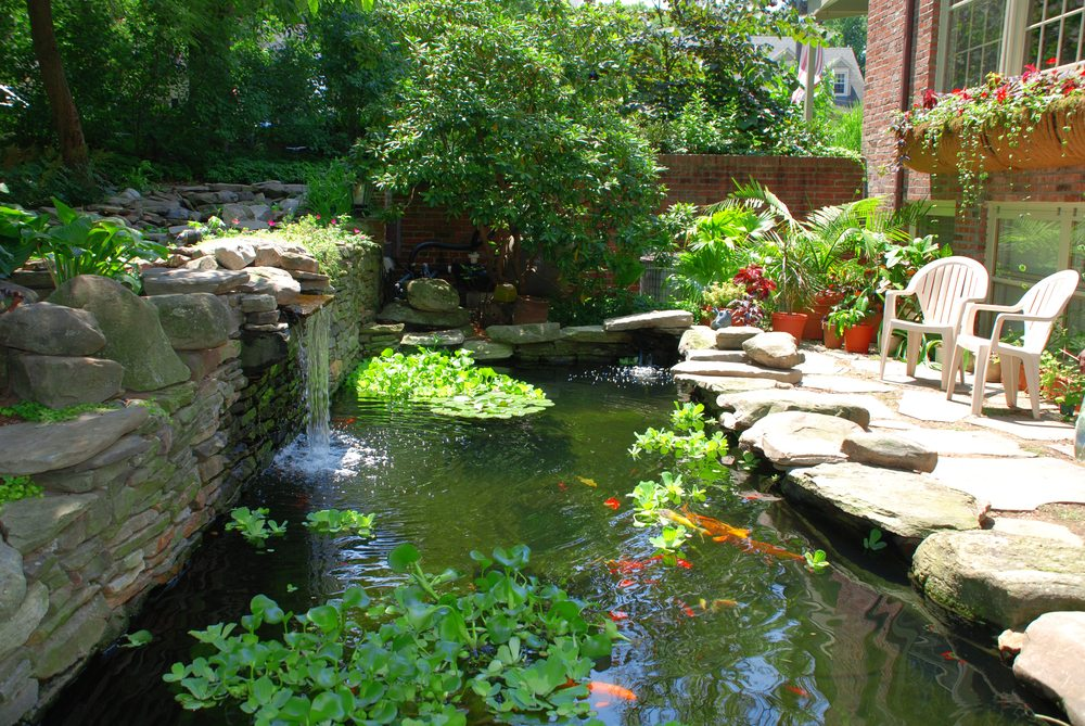 Building a koi pond or garden pond how to take care of for Garden pond specialists