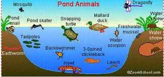 Is Your Pond Ecosystem Vital For Success How To Take Care Of