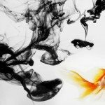 Learning About Goldfish Behavior – Why We Love Them