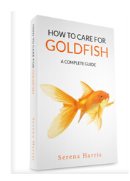 how to take care of fancy goldfish